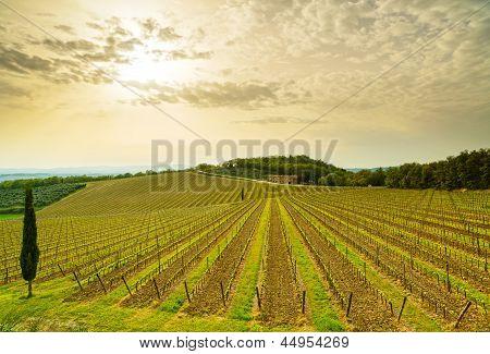 Chianti Region, Vineyard, Trees And Farm On Sunset. Tuscany, Italy