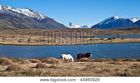 Horses in Patagonia. El Calafate, Santa Cruz Province, Argentina