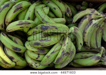 Green bananas Texture