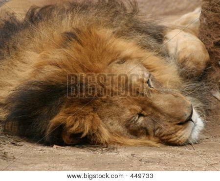 Sleeping Cats Lie