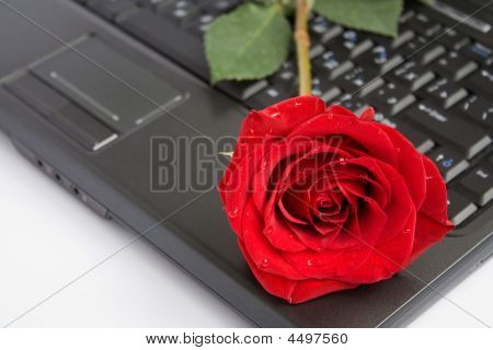 Rose Over Laptop