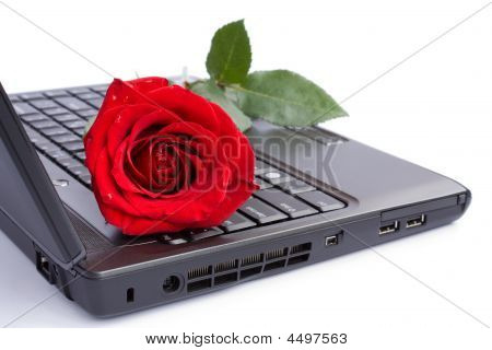 Laptop And Rose