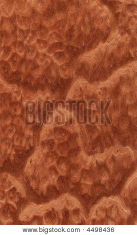 Vavona Burl Texture