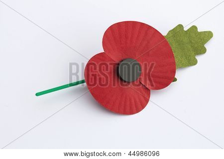 Poppy Appeal For Remembrance / Poppy Day - Isolated On White Background.