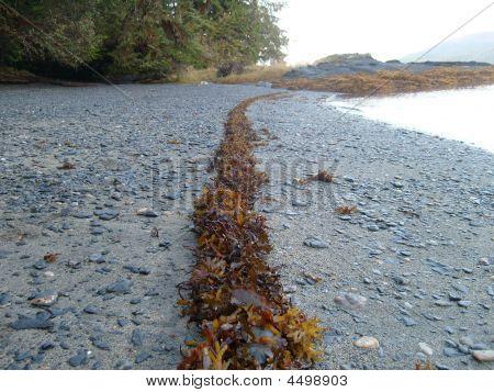 Seaweed Tideline