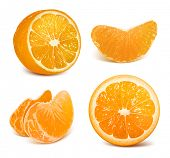 Vector collection of fresh ripe oranges.