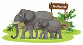 Illustration of the two elephants near the signboard on a white background