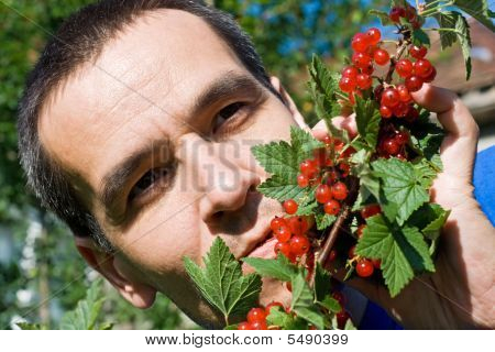 Man Eating Redcurrant