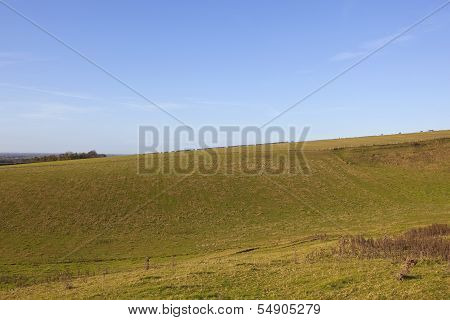 Yorkshire Wolds Pastures