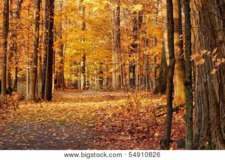 Autumn Nature Trail