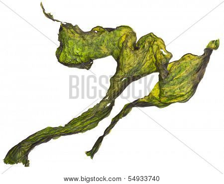 dried seaweed kelp set close up Isolated on white background