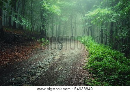 Green fog on a forest road in summer