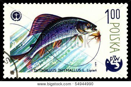 Vintage  Postage Stamp. Fish Grayling.