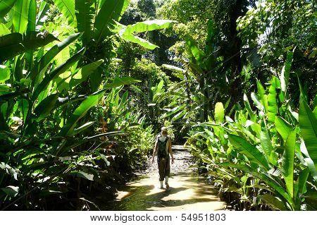 Trek in the Jungle