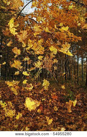 Autumn forest - 3.