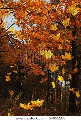Autumn forest - 2.