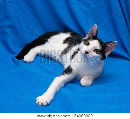 White Cat With Black Spots Teenager Lying On Blue Background