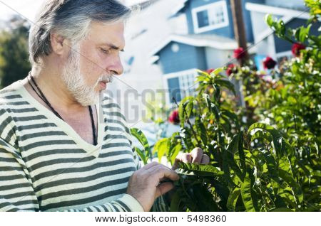 Portrait Of A Mature Man Working In The Garden
