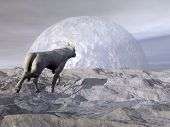 picture of wolf moon  - White wolf walking in the snowy mountain by full moon light - JPG