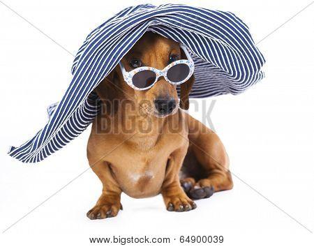 Portrait of Dachshund in sunglasses, Dog in hat
