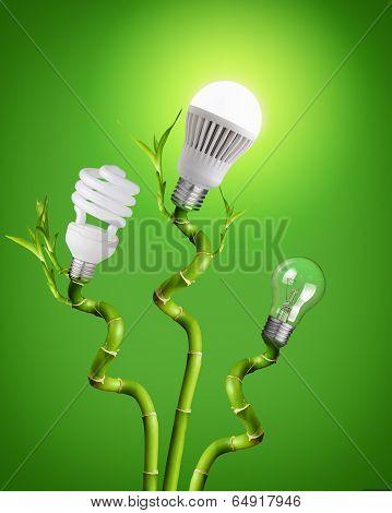 Light Bulbs On Bamboo