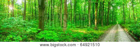 panorama forest trees. nature green wood sunlight backgrounds.