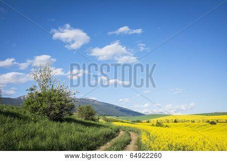 Filed Road In Spring