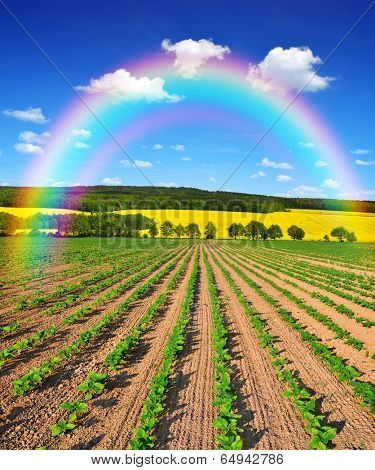 Rainbow above the spring landscape with freshly sown sunflower field