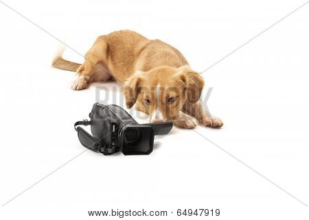 Portrait of dog looking at camcorder isolated over white background