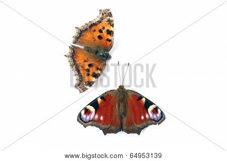 Butterfly Peacock Eye And Tortoiseshell