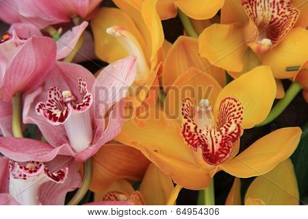 Pink And Yellow Cymbidium Orchids