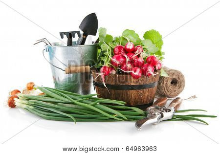Fresh vegetables with garden tools. Isolated on white background