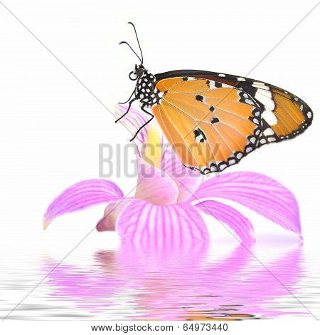 Yellow Butterfly On Orchid Flower