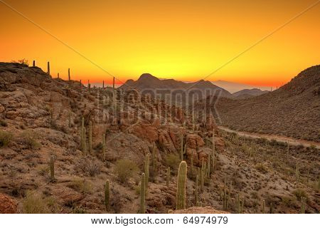 sonoran desert just before dawn, hdr image