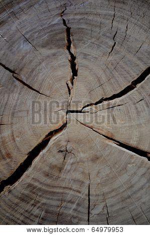 Log End