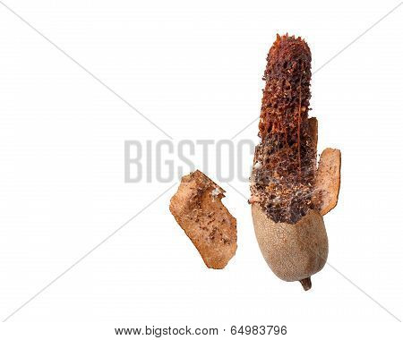 Rotten Sweet Tamarind Isolated On White Background