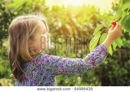 Little Girl And Cherry Tree