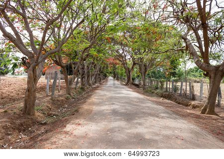 shaded road with trees on the either side