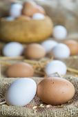 stock photo of hen house  - Fresh free range eggs on a stand in the hen house - JPG