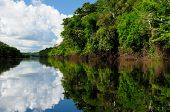 stock photo of rainforest animal  - Amazonas landscape - JPG