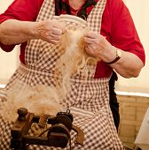 picture of matron  - Photo of a elderly woman that spinning wool - JPG