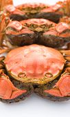 stock photo of cooked crab  - cooked crabs lined up on white background - JPG