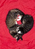 stock photo of kitty  - Cats cute couple heart love animal kitty photo - JPG