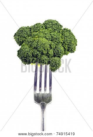 Close Up Shot Of Broccoli Floret