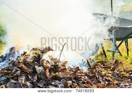 Burning Autumn Leaves In The Garden