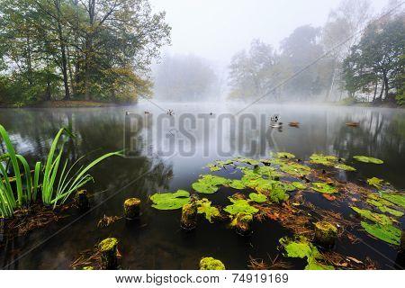 Autumn - pond in autumn misty park