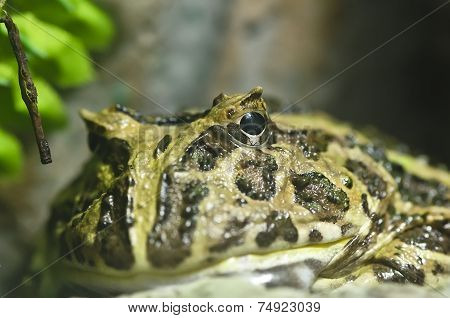 Close-up Shot Of A  Frog
