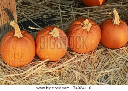 row of small pie pumpkins on hay