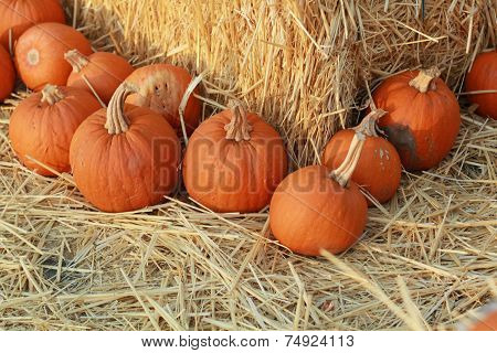 pumpkins at an angle around hay