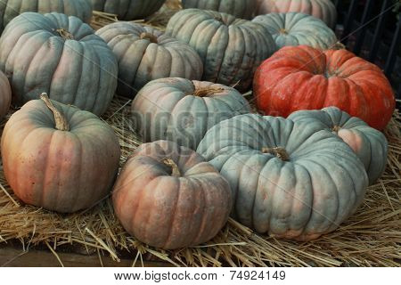 group of fairytale pumpkins